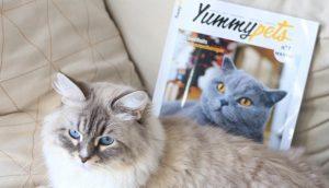 magazine-yummypets-lancementJPG